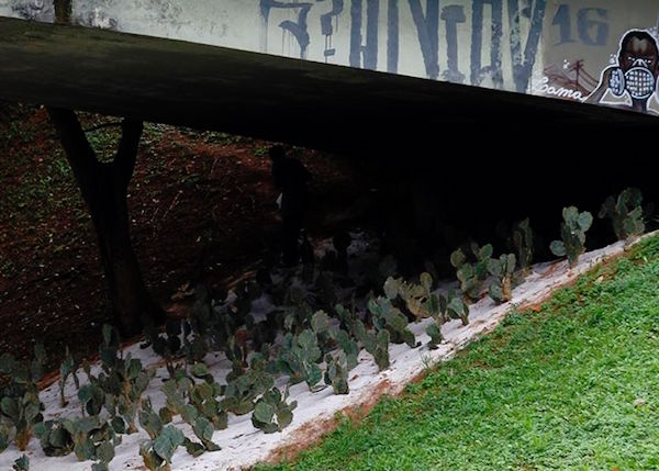 Cactos plantados, em Salvador, embaixo de viadutos. Eles espantam pessoas em situação de rua (Fernando Vivas/A Tarde)