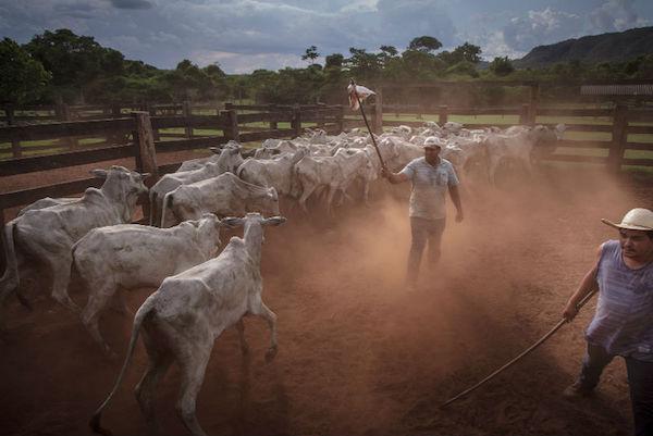 A reportagem usou como base fazendas que tiveram sua localização confirmada pela JBS. Foto: Marcio Isensee e Sá/Repórter Brasil