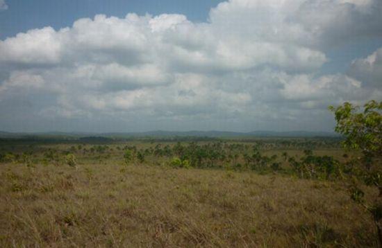 A parte da planície do Estado e a umidade do ar contribuem para o cultivo de soja.