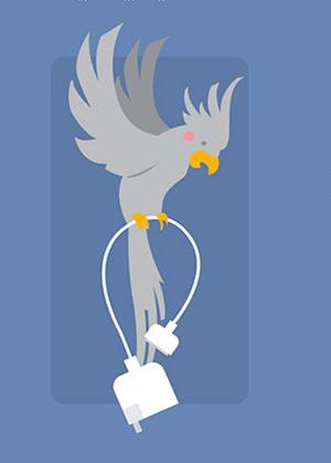 Pela imagem divulgada no estudo, fios de eletrônicos atraem até aves exóticas