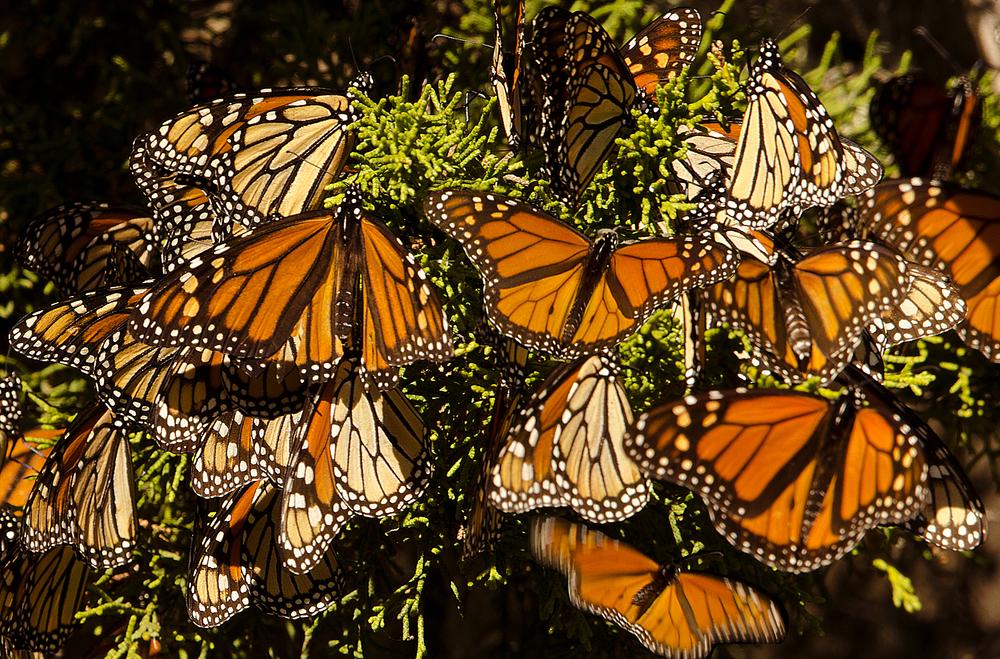 Copyright: Michael Warwick/ Shutterstock