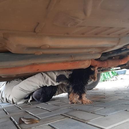 cachorro preso carro - Divulgação/ Corpo de Bombeiros de MT