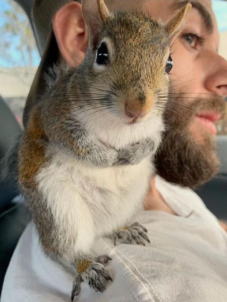 Esquilo foi resgatado com apenas quatro semanas de vida - Reprodução/Instagram