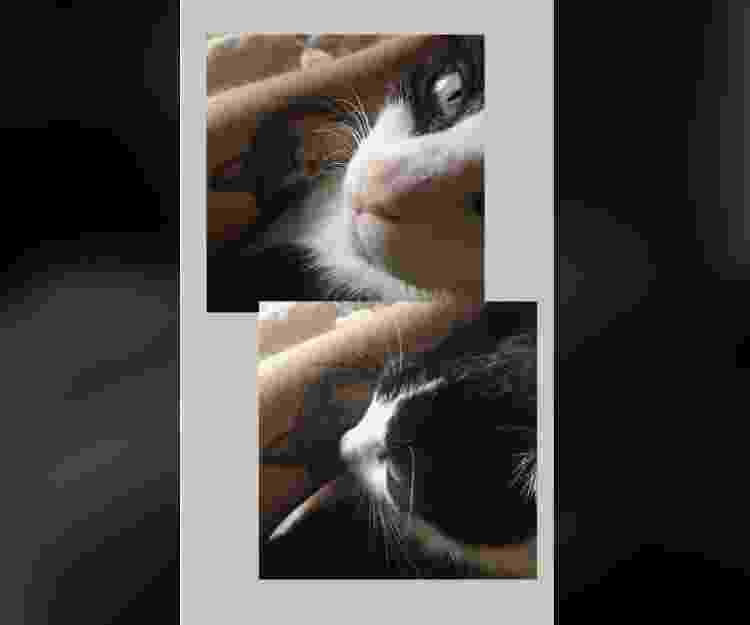 Tatuagem de gatinho - Reprodução/Facebook - Reprodução/Facebook