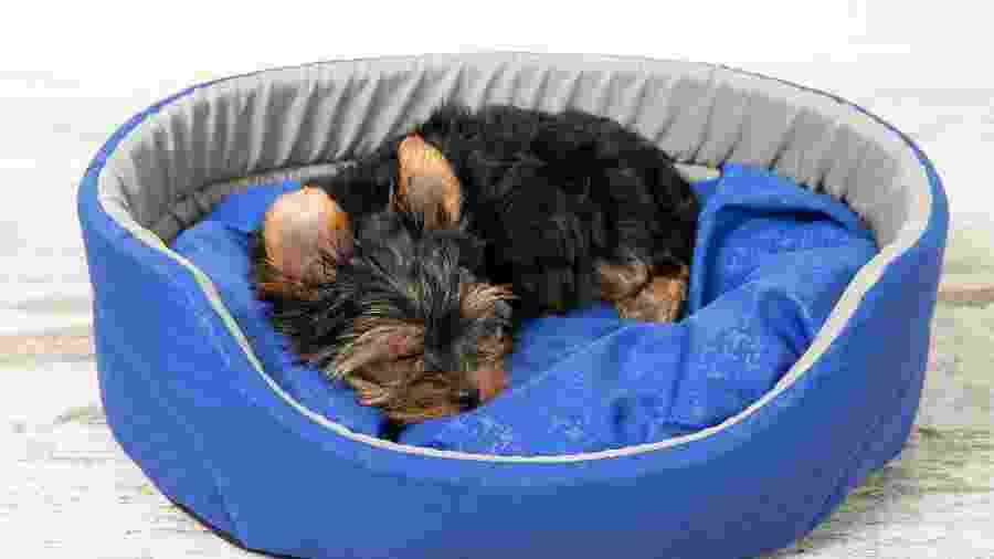 Saiba escolher itens confortáveis para o seu pet - Getty Images