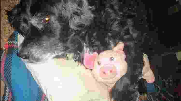 Cachorro dorme abraçado ao seu brinquedo preferido - Reprodução/Facebook - Reprodução/Facebook