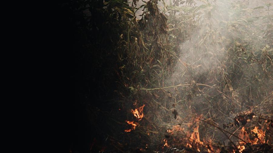 Imagem aérea mostra região do Pantanal devastada após queimadas - Rafael Visentainer/Arquivo Pessoal