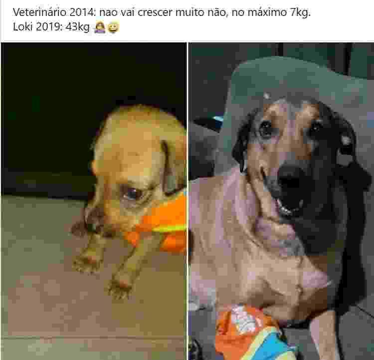 Cachorro adotado que cresceu muito - Reprodução/Facebook - Reprodução/Facebook