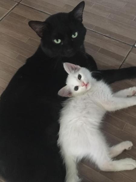 """Gato """"rouba"""" filhote de gata da vizinha - Reprodução/Facebook"""
