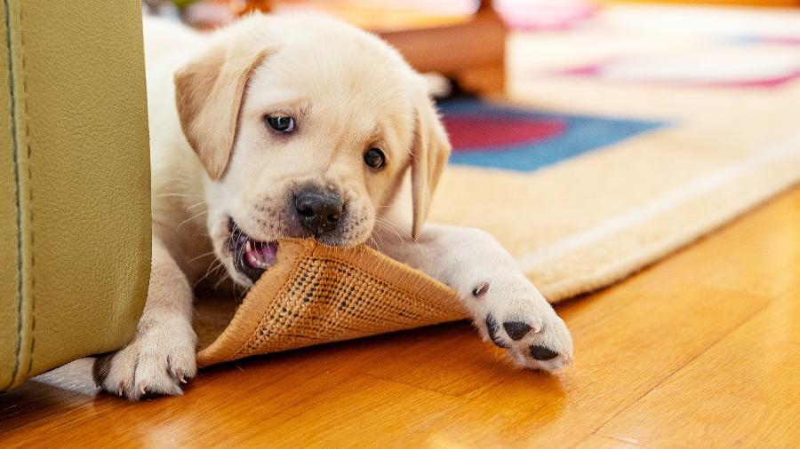 Entenda o que significa sonhar com cachorro, em diferentes cenários - Reprodução/gettyImages