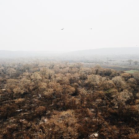 Incêndios que assolam o Pantanal têm deixado um rastro de destruição e prejuízo à atividade pecuária no bioma - Rafael Visentainer/Arquivo Pessoal