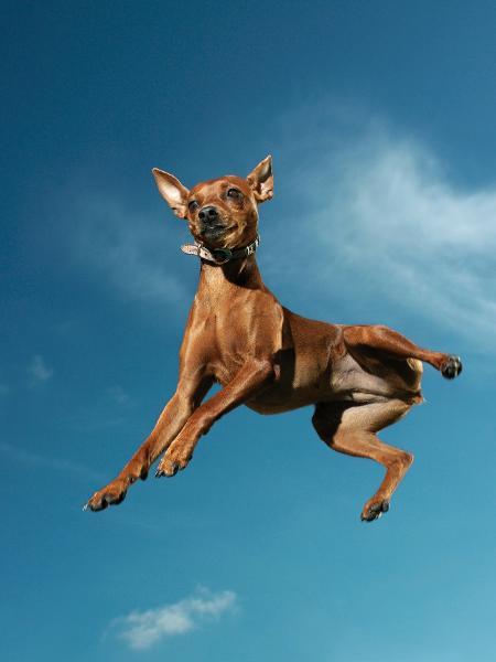 Seu cachorro é muito agitado? Reunimos dicas para investigar a origem do problema - Reprodução/GettyImages