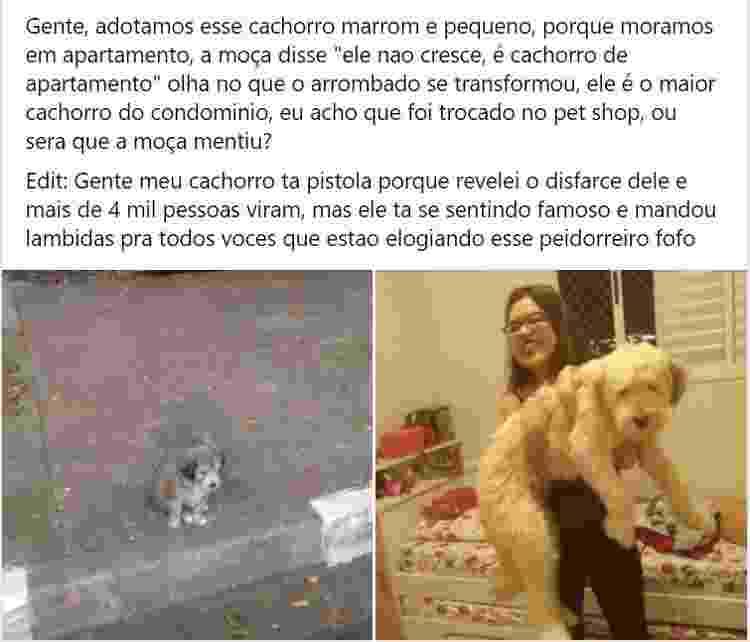 Cachorro adotado se tornou o maior do condomínio - Reprodução/Facebook - Reprodução/Facebook