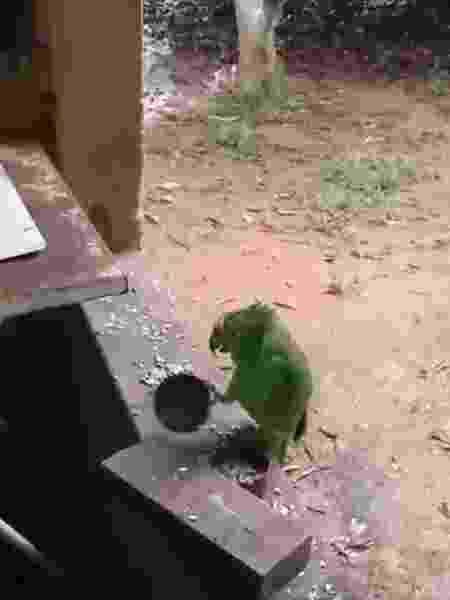 """Papagaio toca e canta """"atirei o pau no gato"""" - Reprodução/Facebook"""