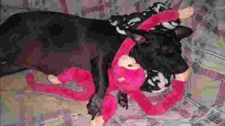 Cachorro que dorme abraçado com o brinquedo - Reprodução/Facebook - Reprodução/Facebook