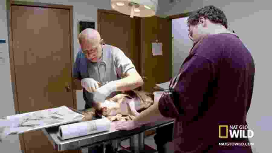 """Cena do programa """"O incrível Dr. Pol"""", exibido pelo NatGeo no Brasil - Reprodução"""