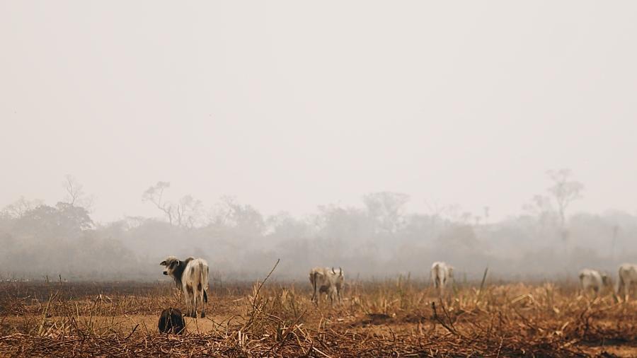 Imagem da área do Pantanal atingida pelas queimadas - Rafael Visentainer/Arquivo Pessoal