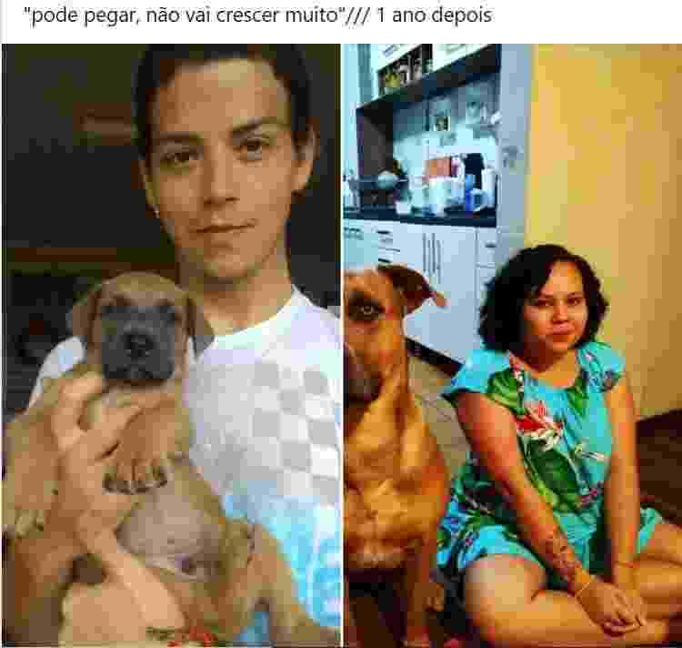 Cachorro adotado cresceu demais e ficou maior que o dono - Reprodução/Facebook - Reprodução/Facebook