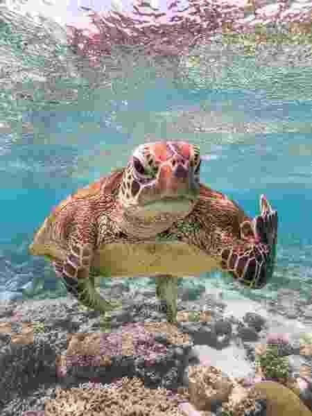 A foto da tartaruga apelidada de Terry foi a vencedora do Prêmio de Comédia da Vida Selvagem 2020 - comedywildlifephoto