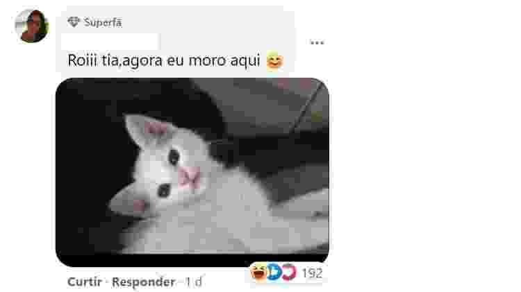 Comentário no post do gato Salem - Reprodução/Facebook - Reprodução/Facebook