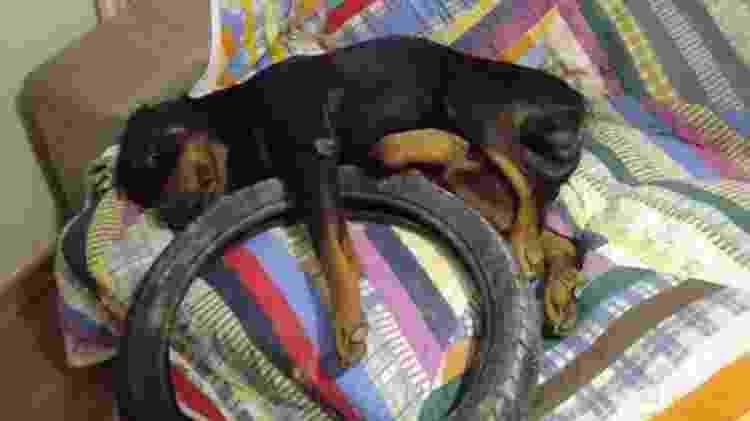 Cachorro dormindo abraçado com o pneu - Reprodução/Facebook - Reprodução/Facebook