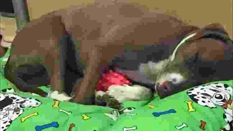 Cachorro dorme abraçado com sua bolinha - Reprodução/Facebook - Reprodução/Facebook