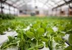 Plantar na cidade dá lucro: mercado de fazendas urbanas beira os R$ 50 bi