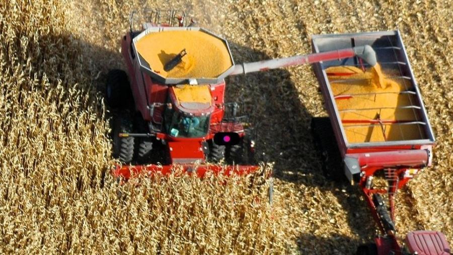 Lavoura de milho -