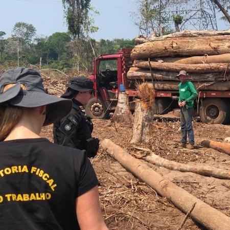 Operação combate madeira ilegal em Rondônia  - Arquivo/Divulgação
