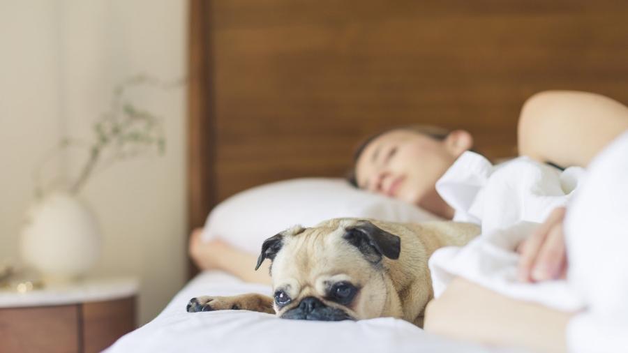 Você dorme bem? Veja por que o sono é a habilidade do futuro no trabalho -