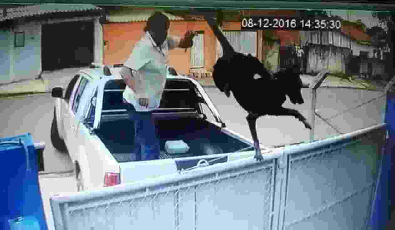 8.dez.2016 - Homem joga cão por cima do portão de ONG de proteção animal em Itapetininga, interior de São Paulo - Reprodução/Facebook/uipa.itapetininga