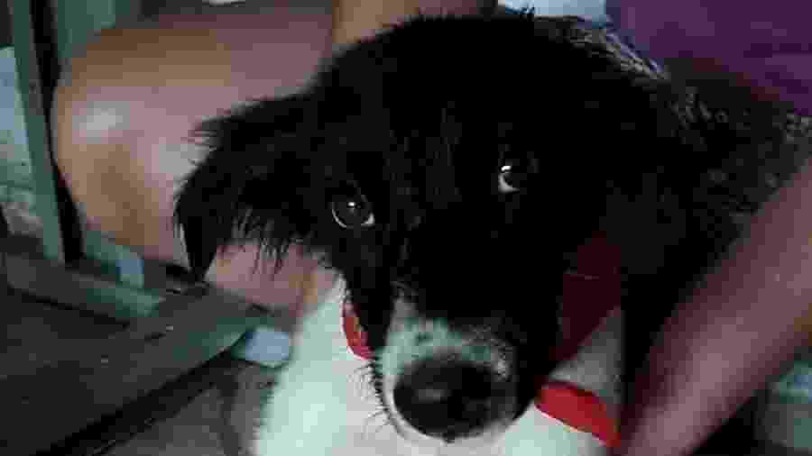 Cão que foi jogado da janela de carro em movimento em São Vicente agora se chama Francisco - Lilian Jolie/Arquivo pessoal