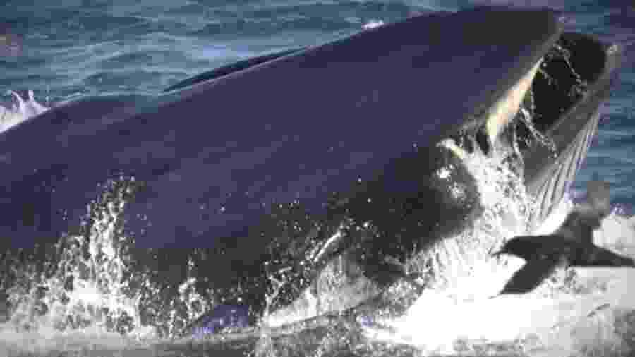 Rainer Schimpf ficou preso na boca de uma baleia - Reprodução/YouTube/NBCNews