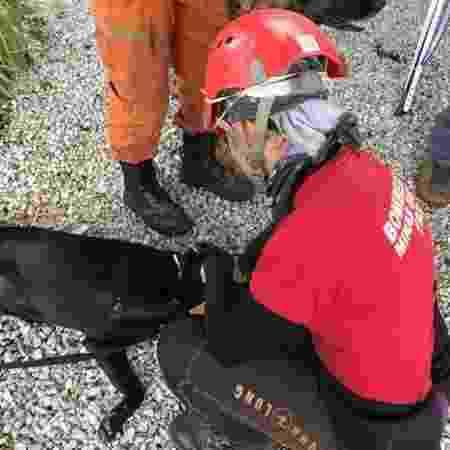 """""""Eles trazem alegria. Ainda mais numa tragédia como esta, um animal faz toda a diferença"""", diz a sargento Clarissa Carvalho - BBC/LUIZA FRANCO - BBC/LUIZA FRANCO"""