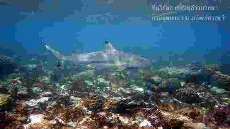 Após o fechamento, tubarões-de-pontas-negras-de-recife começaram a aparecer na baía - THON THAMRONGNAWASAWATImage  - THON THAMRONGNAWASAWATImage