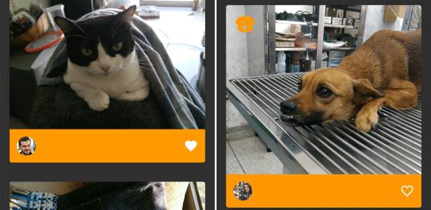 Aplicativo permite associar pessoas a seus cães e gatos de estimação