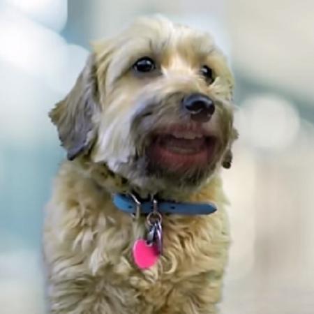 Betina, a cachorrinha com R$ 1 milhão de lambidinhas de amor - Reprodução/Facebook/Prefeitura de Curitiba