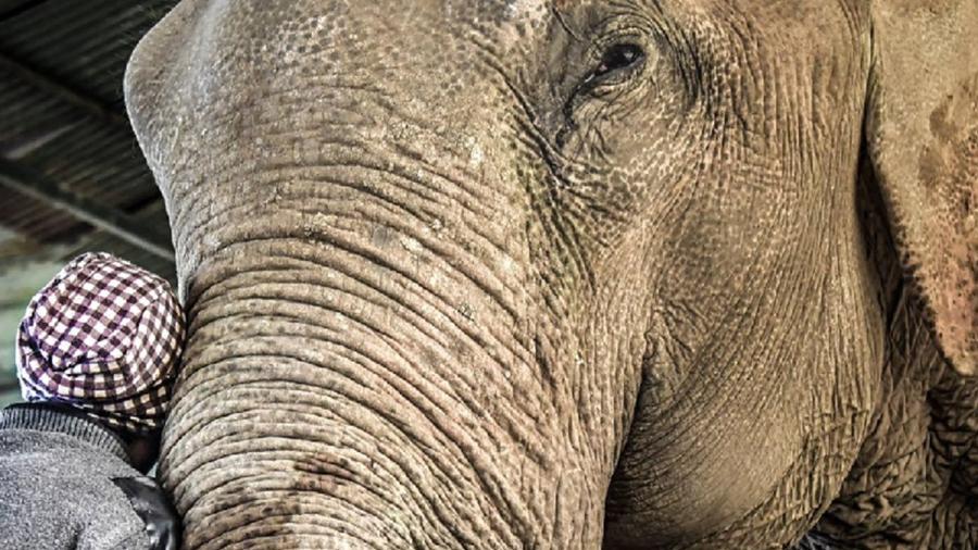 18 elefantes foram encontrados mortos na Índia - Divulgação / Wildlife SOS