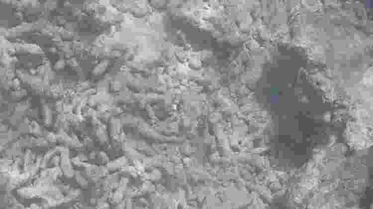 Recifes de coral mortos - muitos barcos acabavam ancorando neles - Reprodução - Reprodução