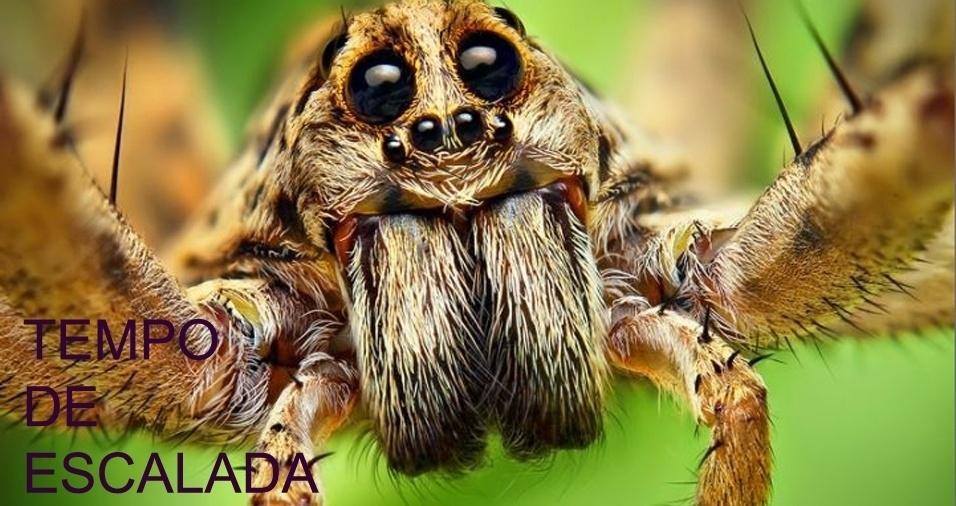 7. Uma aranha está subindo um muro de 10 metros. Durante o dia, ela consegue subir dois metros, porém todas as noites, ela desce um metro. Em quanto tempo ela conseguirá chegar ao topo?