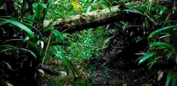 Amazônia - Reprodução/grayline - Reprodução/grayline