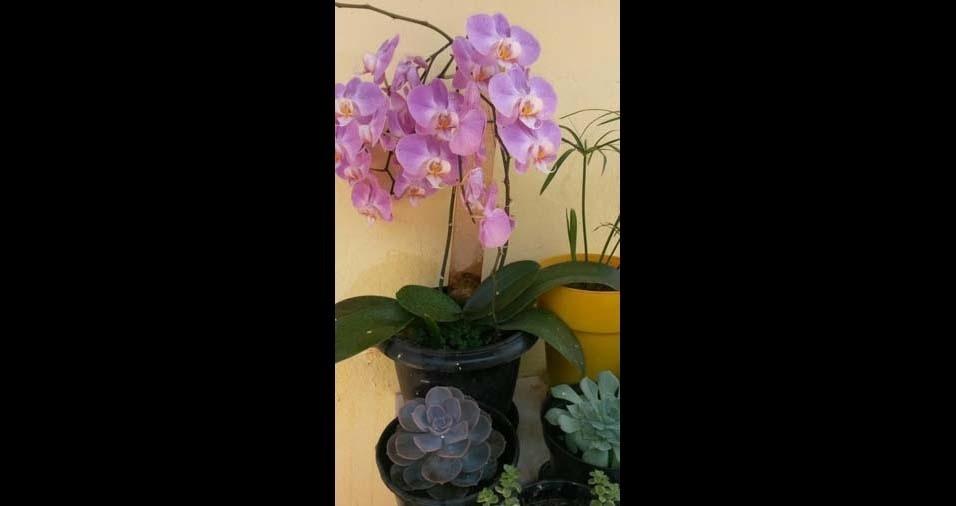 "Elisete Deam, Marília (SP): ""orquídea"""