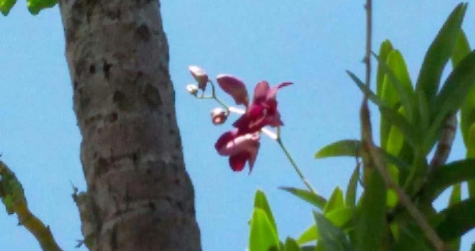 As flores do jardim de Ivanir Cambui Ferreira, de São Vicente (SP)