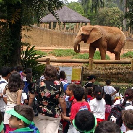 Jardim Zoológico de São Paulo - Reprodução/zoologico