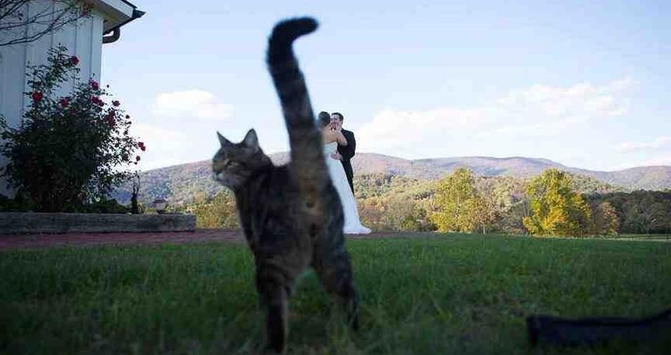 3. Gatos também amam ensaios fotográficos de casamento