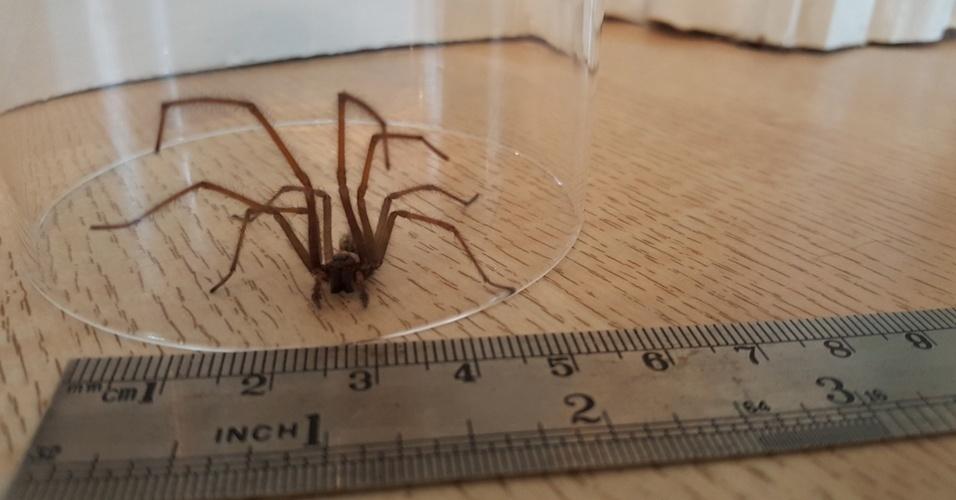 1. Se você tem medo de aranhas, elas vão parecer maiores do que são