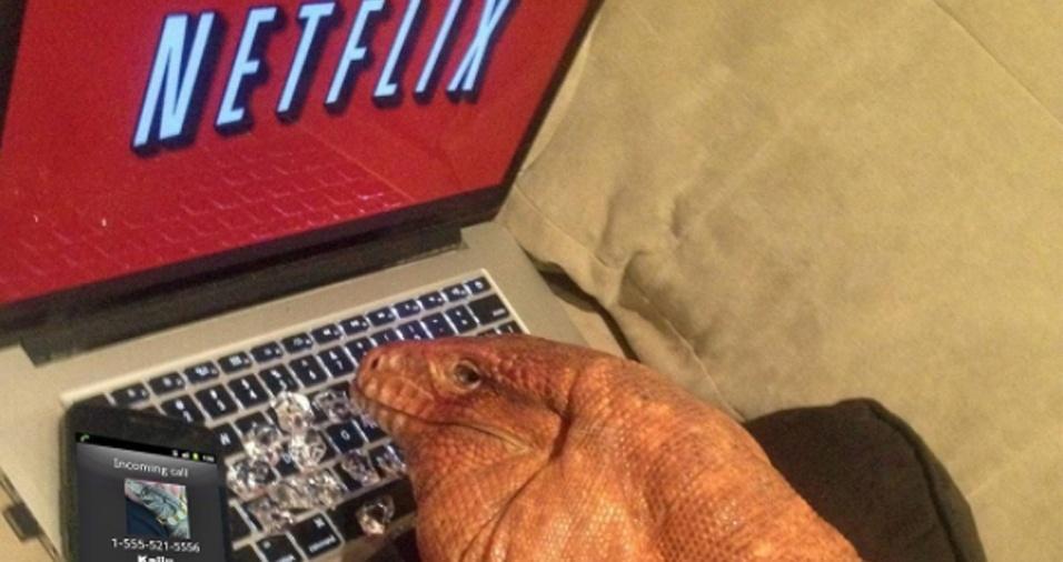 27. Comer, dormir e? Já mencionamos que o lagarto ama colocar as séries em dia? Talvez não seja mera coincidência? MacGyver pode ser seu espírito animal!