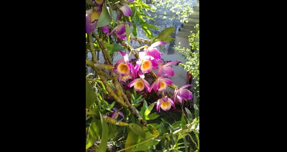 Marília Bassi, de Araraquara (SP), apresenta a orquídea de seu quintal
