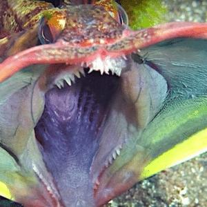 Fotos assustadoras do fundo do mar - Reprodução/Busttle