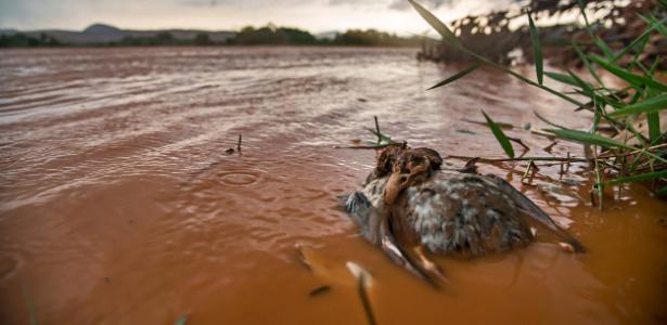 O fotógrafo Leonardo Merçon, de 34 anos, presenciou o desastre de Mariana, em Minas Gerais, e registrou os danos ambientais e o sofrimento da população